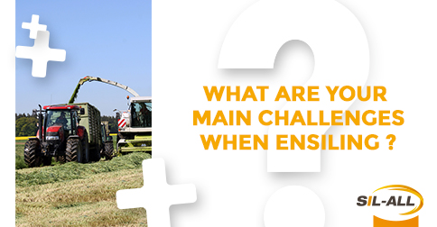 What are your main challenges when ensiling?
