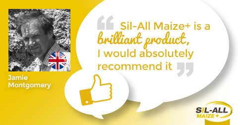 """Sil-All Maize+ is brilliant product that I would absolutely recommend."""