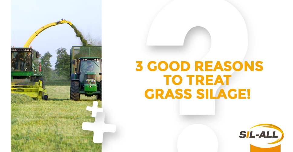 Grass silage: why using inoculants?