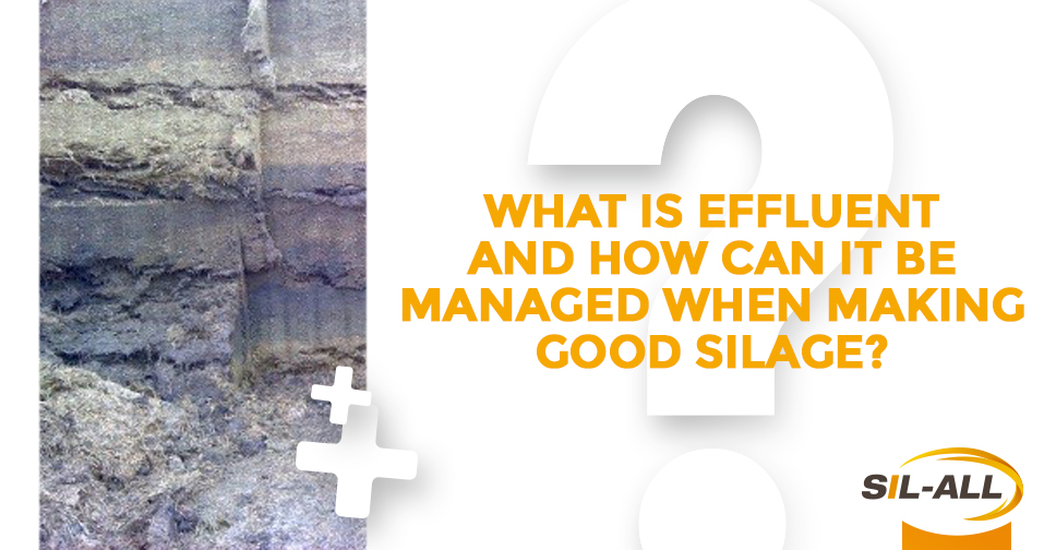 What is effluent and how can it be managed when making good silage?