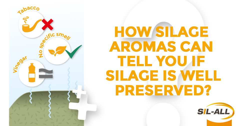 """Did you know?"" : silage aromas & meanings"