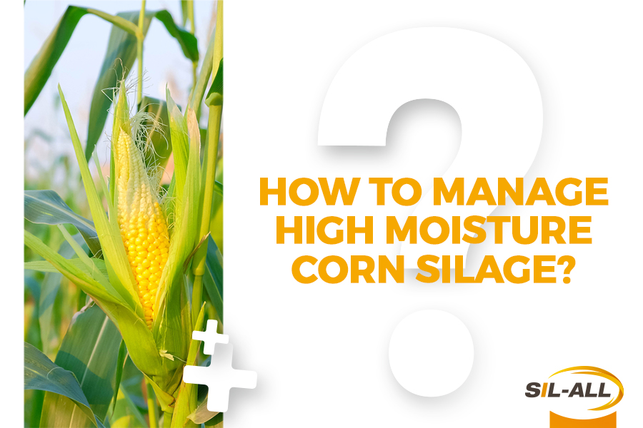 Good High Moisture Corn silage management benefits both farm and animals
