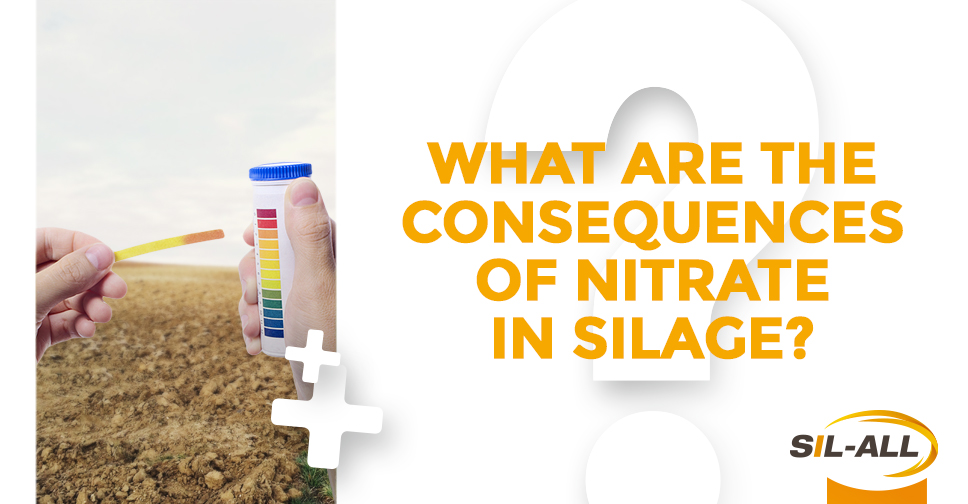 What are the consequences of nitrate on silage?