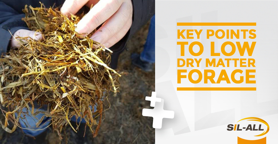 Low Dry Matter Forage