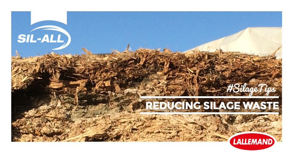 Silage tips: reducing silage wastage